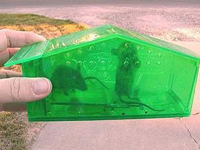 2015-06-02.mouse-trap