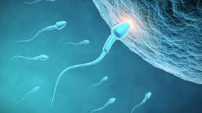 2016-03-09.sperm-egg